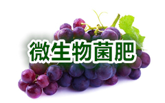 "<div align=""left""> 	<a href=""http://hengzhixin.cn/Microbial-fertilizer"" target=""_blank"" utype=""1#900"">01.《微生物菌肥生产配方集》</a>  </div>"