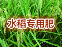 "<a href=""http://www.hengzhixin.cn/Rice-fertilizer"" rel="