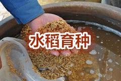 "<a href=""http://hengzhixin.cn/rice-breeding"" target=""_blank"" utype=""1#1033"">04.《水稻育种新技术专集》</a>"