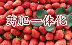 "<a href=""http://hengzhixin.cn/medicine-fertilizer"" target=""_blank"" utype=""1#1117"">07.《药肥一体化新技术专集》</a>"